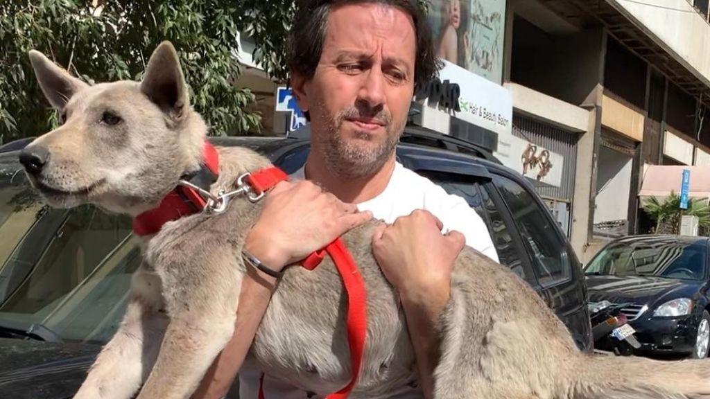 Animales perdidos en Beirut