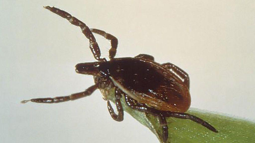 La enfermedad de Lyme se propaga por la presencia de garrapatas