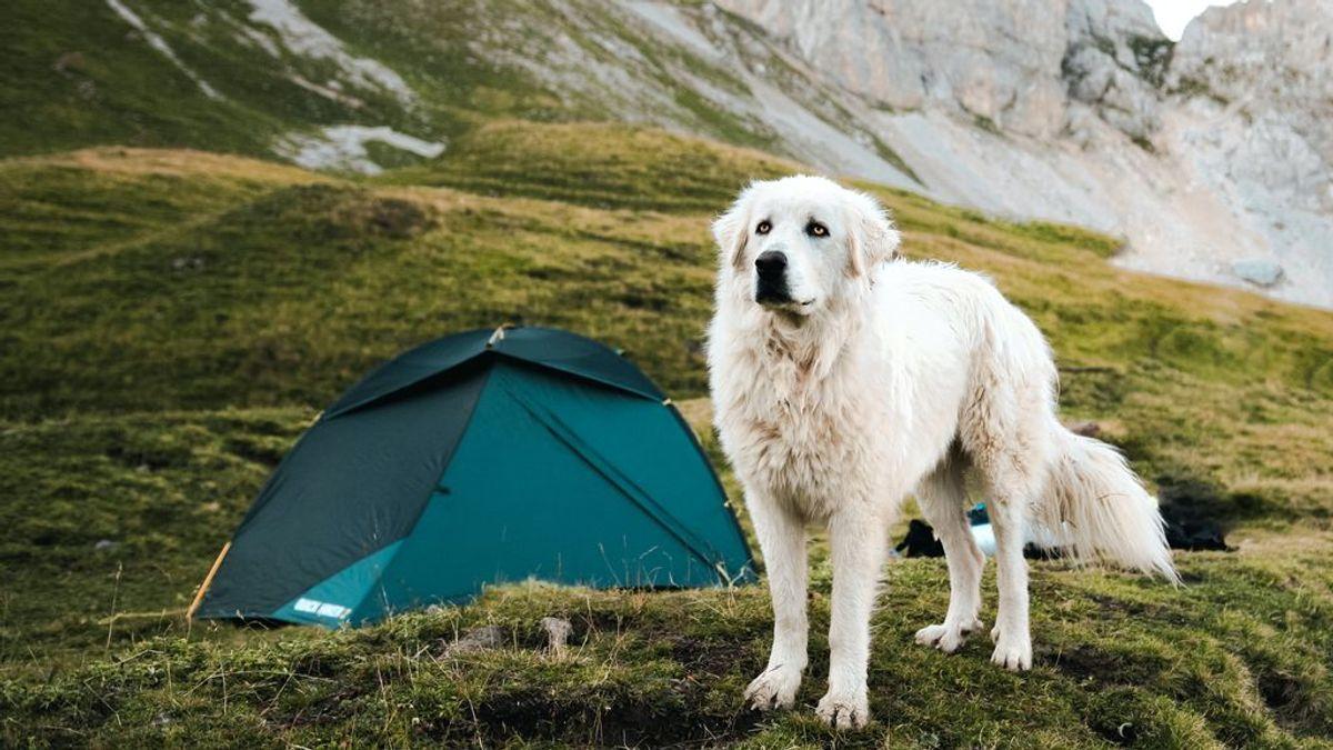 Consejos para disfrutar de una buena acampada con tu perro