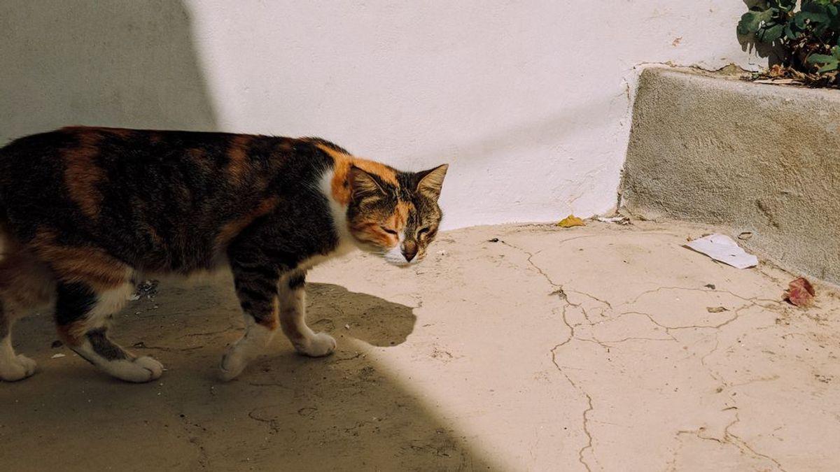 Cómo elegir la mejor arena para tu gato, según vuestras necesidades