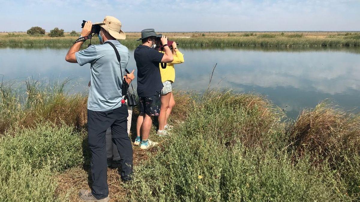 Doñana con mascarilla: una visita al mayor humedal de España, tras el confinamiento