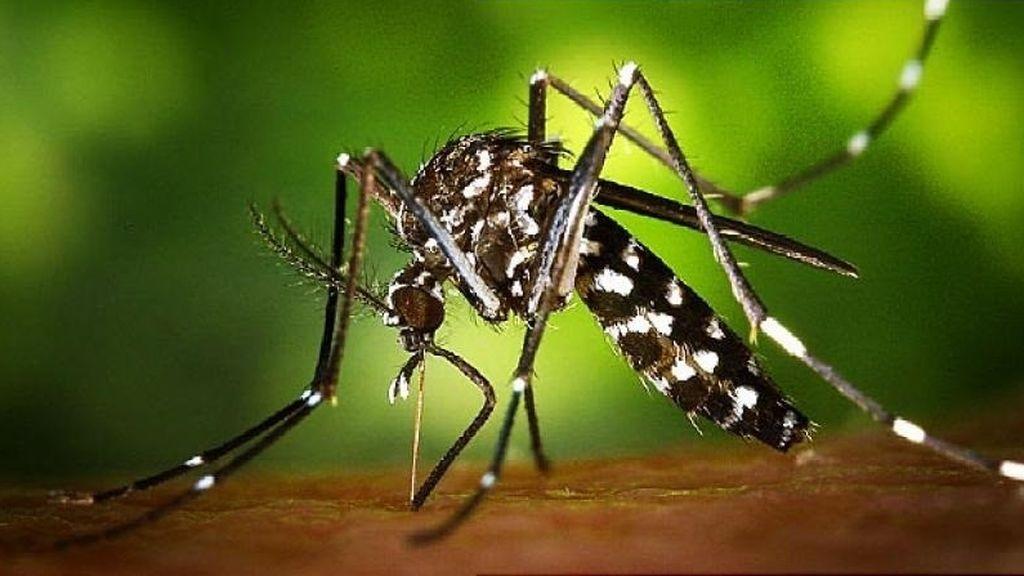 El mosquito tigre ha aumentado su presencia en España un 70% respecto al año pasado