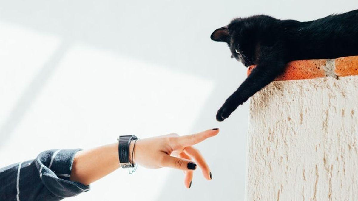 Enfermedad por arañazo de gato: claves sobre la bartonellosis