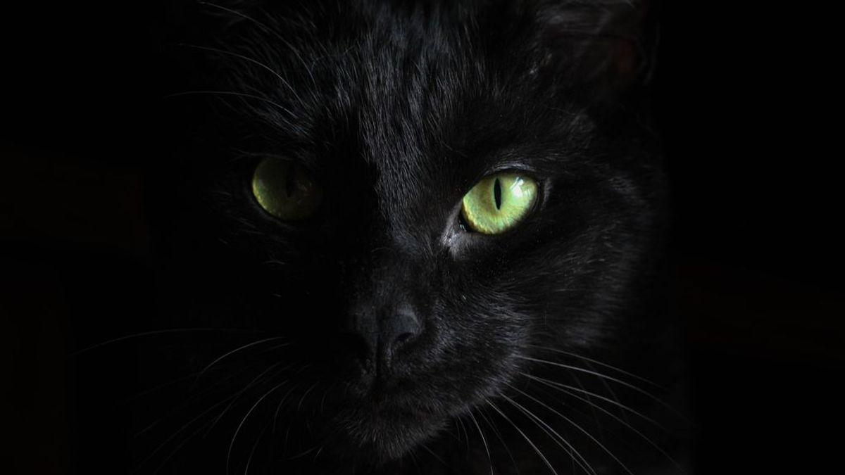 Los bigotes de tu gato te están dando información valiosa: cómo se encuentran, qué van a cazar y cómo consiguen darse la vuelta en el aire