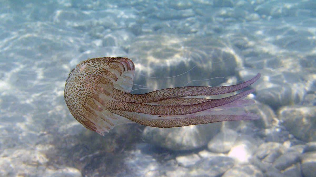 Lo de la orina para la picadura de medusa es un mito: lo que sí debes hacer