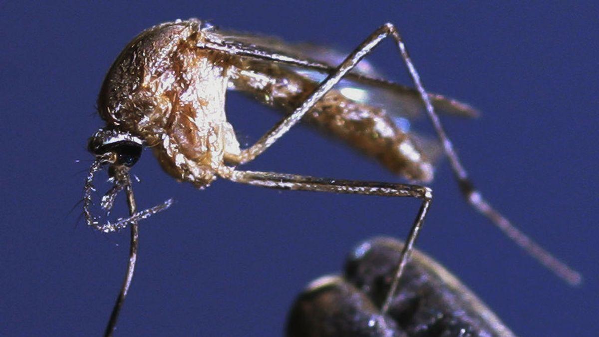 España había registrado siete casos de virus del Nilo desde 2010, según el Centro Nacional de Epidemiología