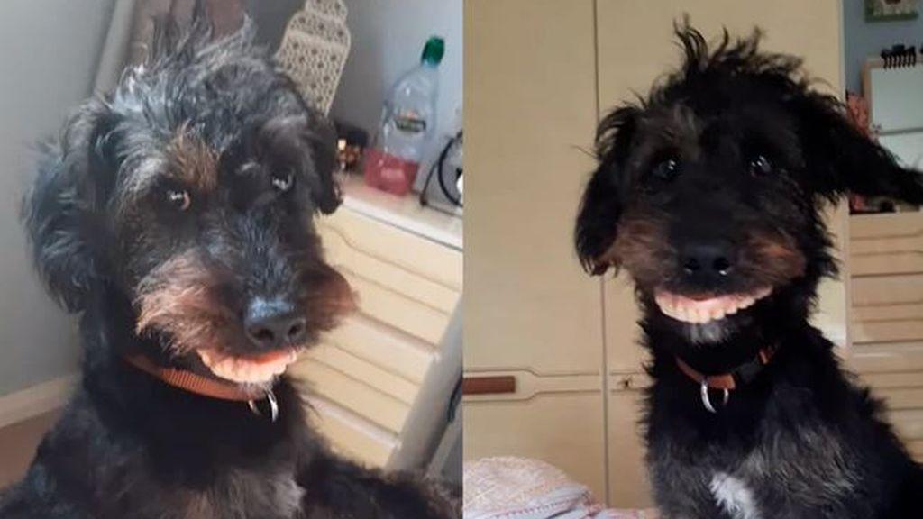 Un perro roba la dentadura postiza de su dueña: uno de los vídeos más virales de la Red