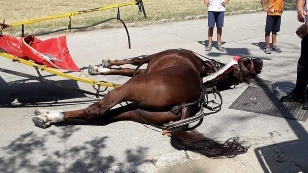 """Un caballo muere por un golpe de """"calor abrasador"""" mientras llevaba en un carruaje a varios turistas"""