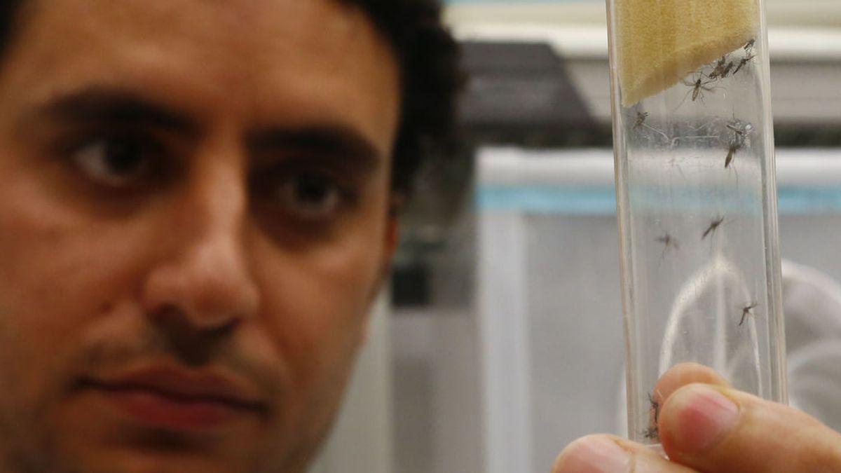 Brote en Andalucía: qué relación hay entre la encefalitis y el virus del Nilo-Occidental