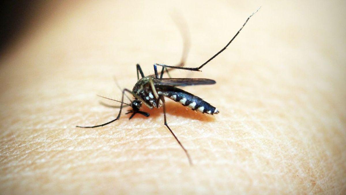 Murciélagos y golondrinas: el arma biológica para combatir el virus del Nilo