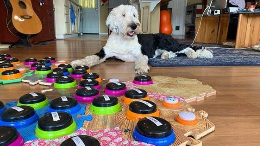 Una perra consigue comunicarse con su dueña a través de unos botones