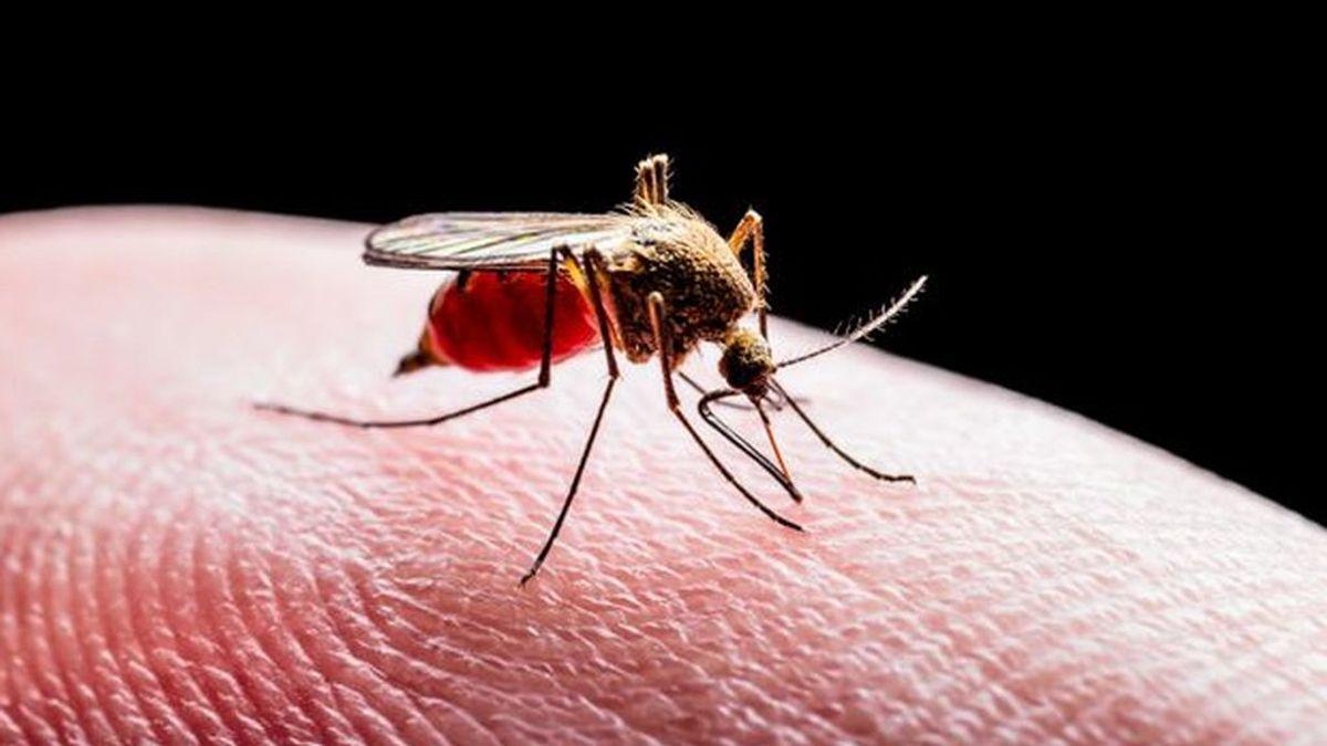 Bajan a 26 los sospechosos de tener fiebre del Nilo; hay 21 hospitalizados, siete de ellos en la UCI