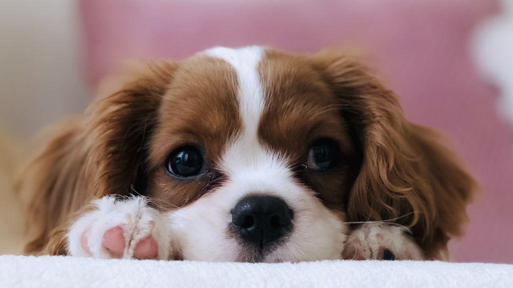 Pérdida de pelo en perros: causas y soluciones para poner fin a este problema