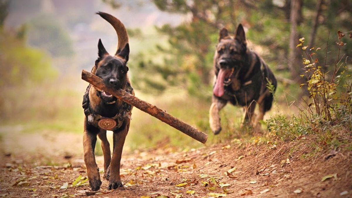 """""""Mi perro tiene miedo a otros perros"""": soluciones para hacer más fácil la vida de nuestra mascota"""