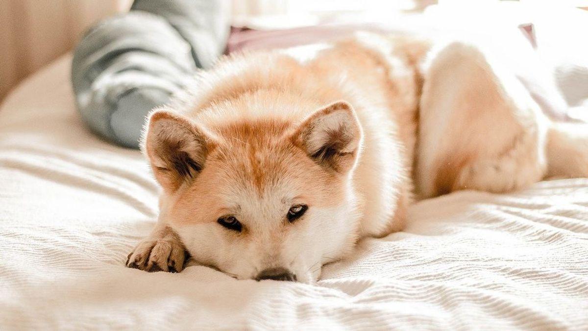 dog-3388070_1280