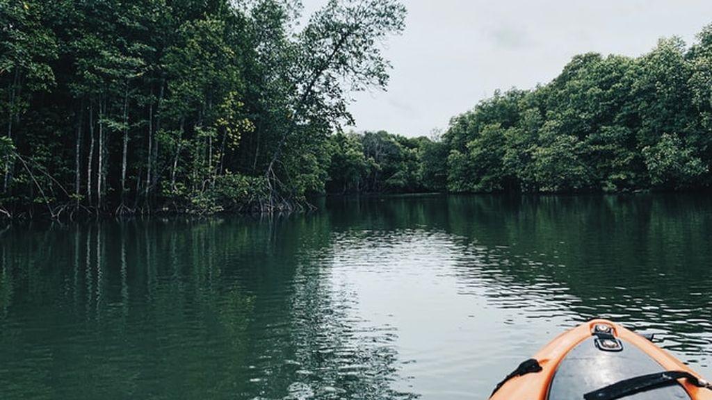 El mundo está perdiendo sus manglares: el mapa que muestra las zonas más afectadas