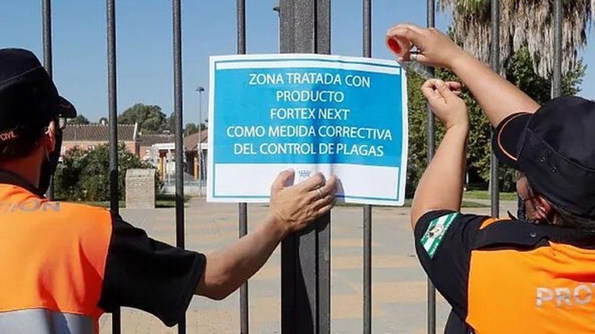 El brote del virus del Nilo en Sevilla sube a 35 casos sin plazo para controlarlo