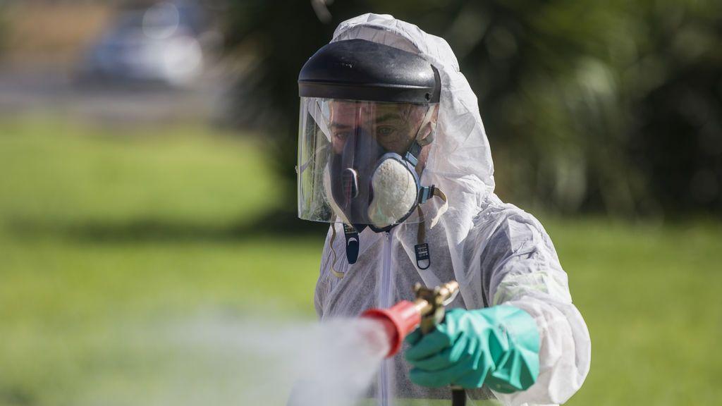 Muertos por la picadura de un mosquito común con el virus del Nilo, ¿por qué nos pican?