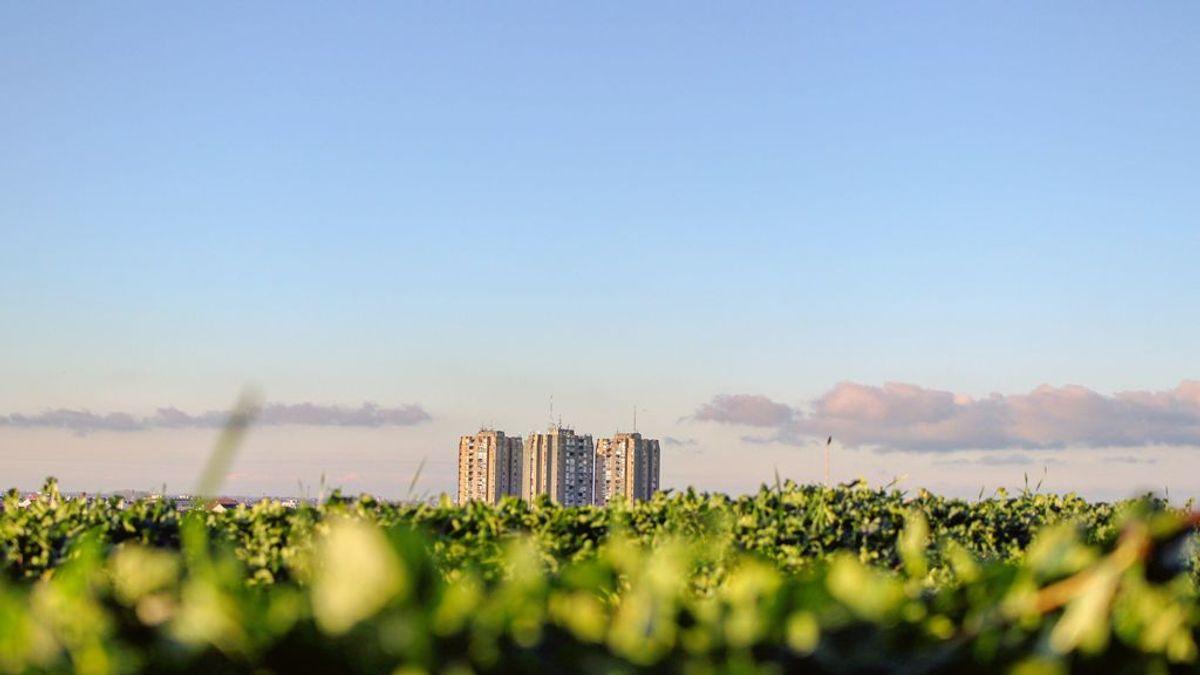 Ecología urbana: cómo reformular las ciudades para hacerlas más sostenibles
