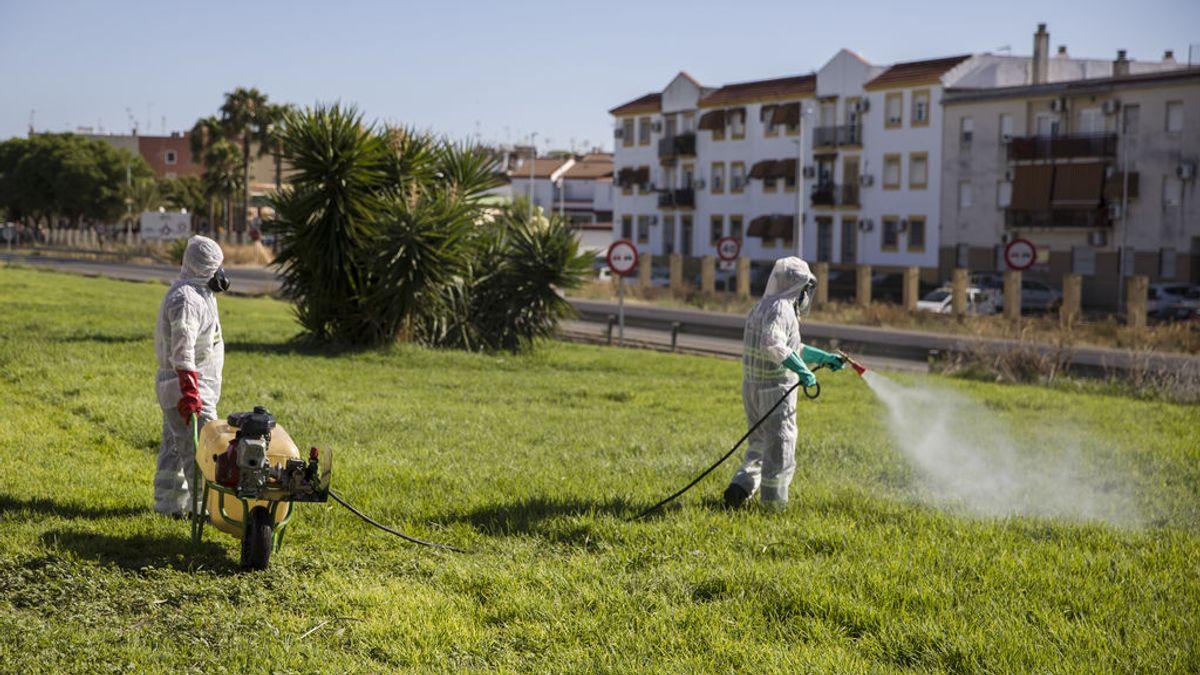 Ascienden a 39 los casos sospechosos de tener virus del Nilo, con 23 hospitalizados, ocho en UCI