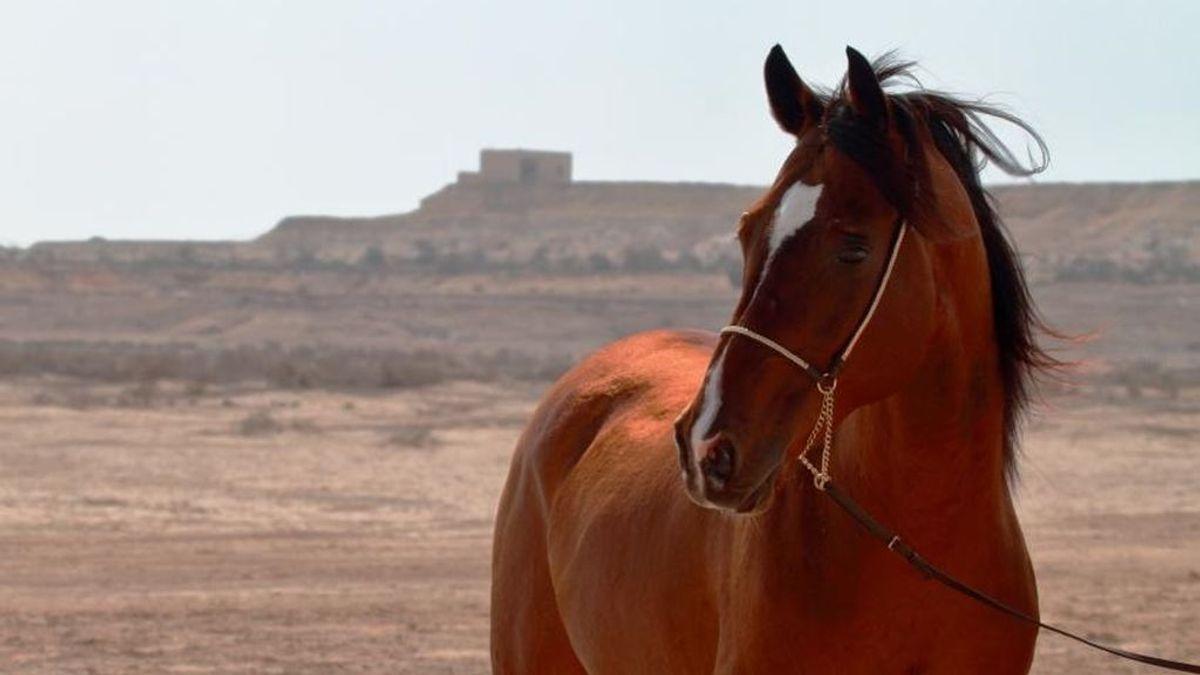 Andalucía suma 19 casos de fiebre del Nilo detectados en caballos