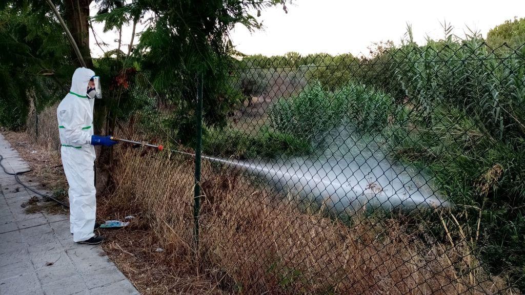 Virus de la fiebre del Nilo en Andalucía: positivos diecinueve caballos y dos aves