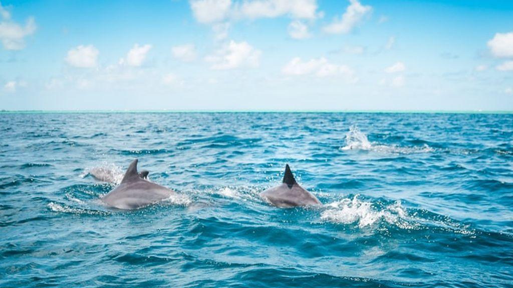 Denunciado un hombre por acosar a un grupo de delfines con una moto acuática
