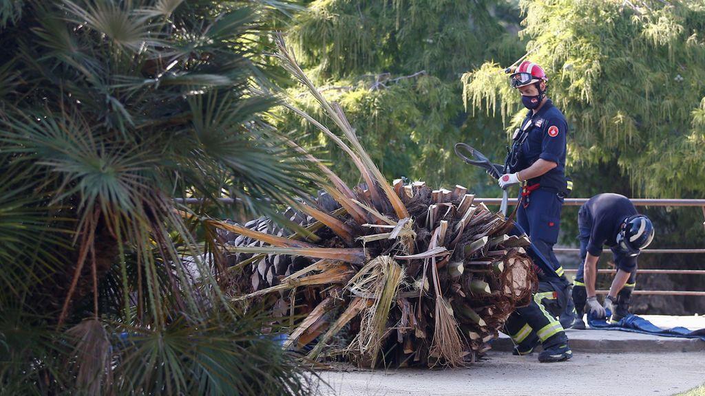 Un hombre de 41 años muere tras caerle una palmera en el parque de la Ciutadella de Barcelona