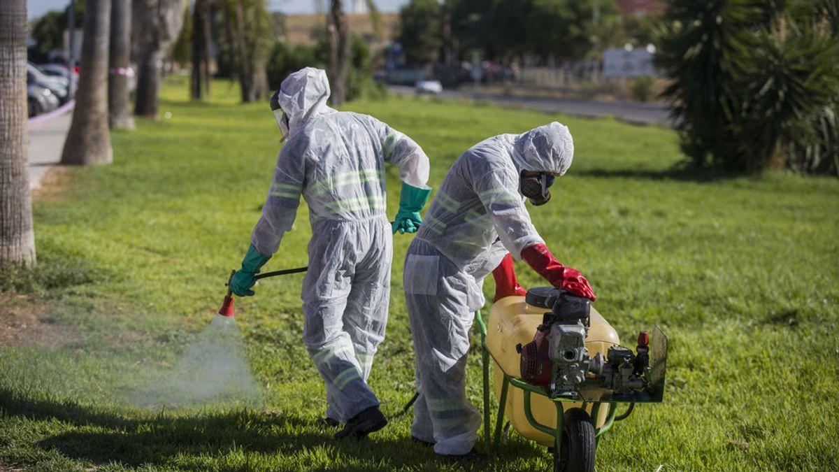 El virus de la Fiebre del Nilo alcanza Sevilla Este: aumentan a 45 los casos, con 20 pacientes ingresados