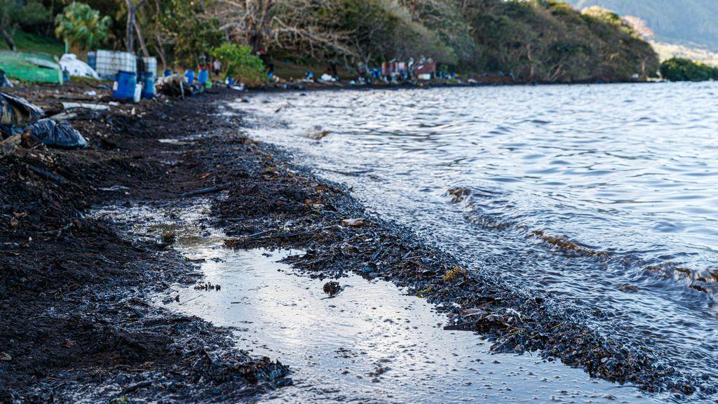 Al menos trece delfines muertos en Mauricio tras el derrame de petróleo