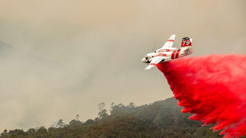 Milagro ambiental: las secuoyas milenarias sobreviven a los incendios de California