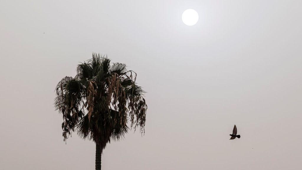 39 grados a las 06:30 de la madrugada: la noche infernal que han sufrido en Pájara (Fuerteventura)