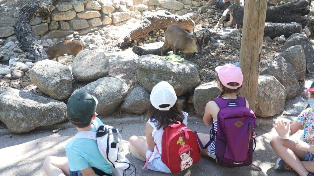 Estudio constata baja tasa de contagios de menores en campamentos de verano