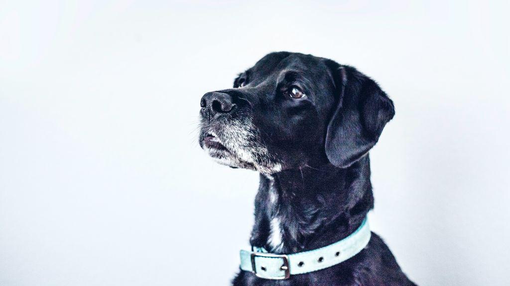 Los temblores y la inapetencia no son buenas señales: motivos que pueden llevar a tu perro a sufrirlas