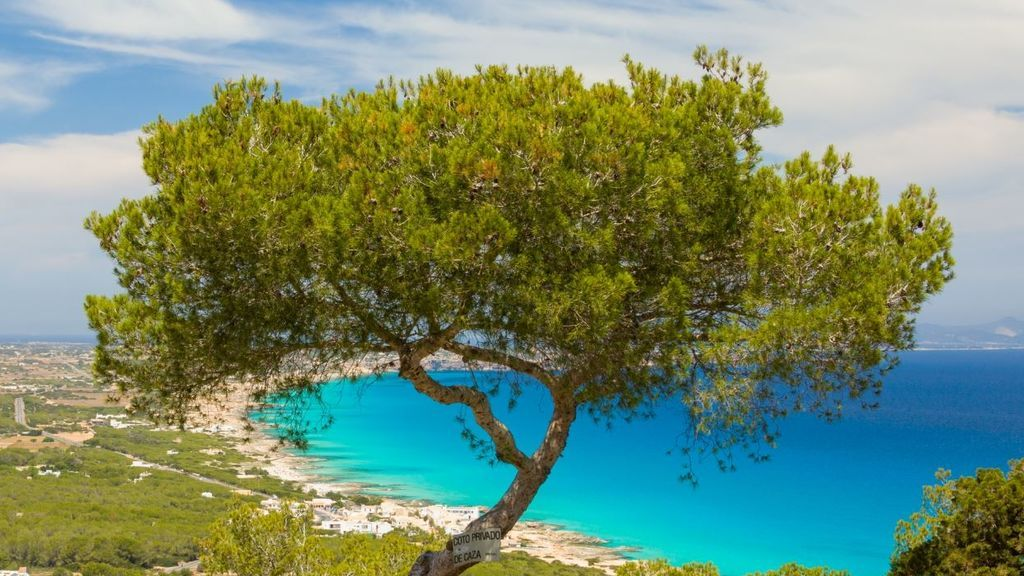 Detenido el juez de paz de Formentera por tener a trabajadores que debían estar en cuarentena