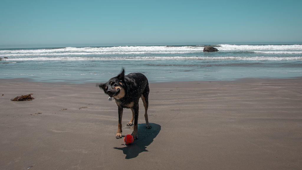Ni el sol ni el calor podrán con tu perro: claves para evitar quemaduras innecesarias