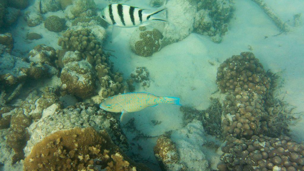 Los huracanes lo arrasan todo, también bajo el mar: cómo lo resiste un arrecife de coral