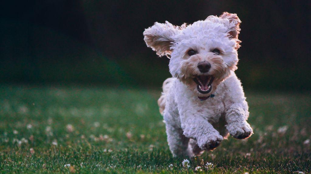 Adoptar una mascota, o cómo luchar contra el abandono animal y salir ganando