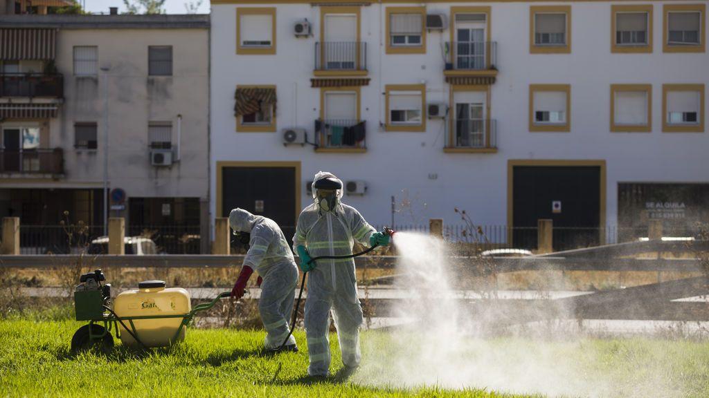 Suben a 49 los afectados por el virus del Nilo en Sevilla