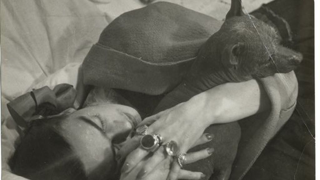 Sin pelo, divinos y muy televisivos: todo sobre los xolos, los perros mexicanos que Frida Kahlo adoraba