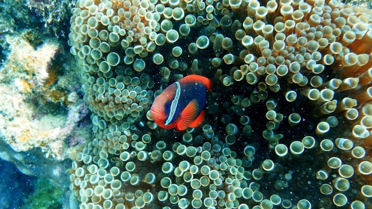 Los peces de arrecife son cada vez más coloridos y los biólogos no tienen claro por qué