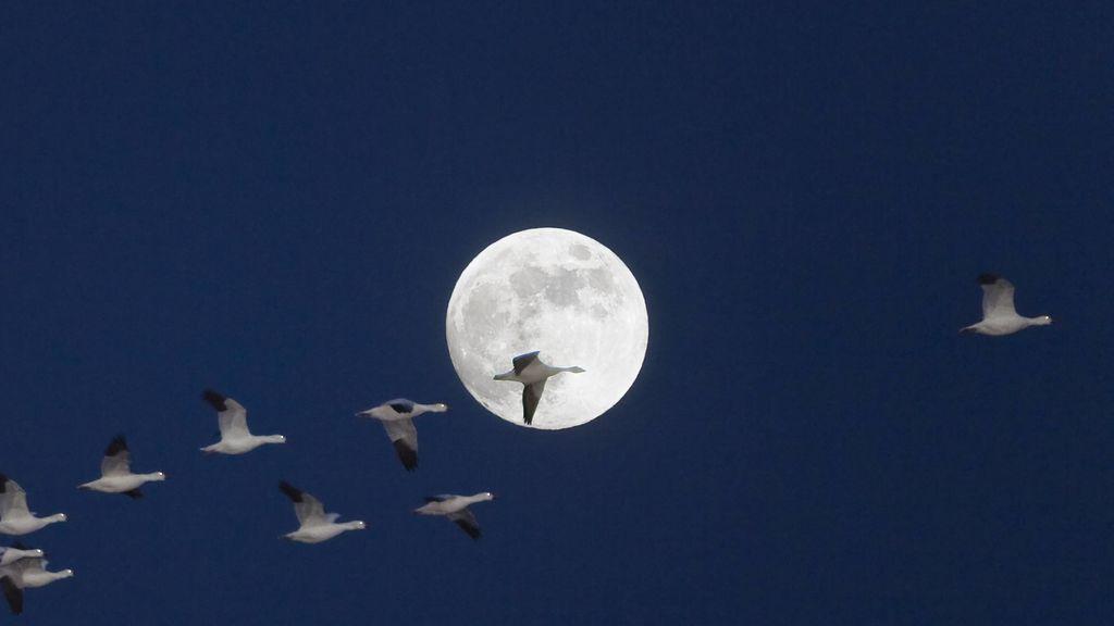 Se acerca la luna llena del maíz: los detalles para ver el último plenilunio del verano
