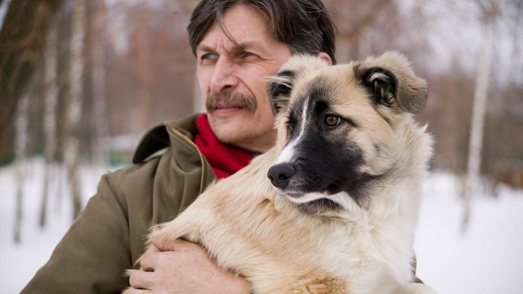 Otoño, época de muda de los perros: consejos para que tu casa no se llene de pelos
