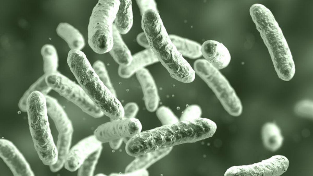 """Una """"bacteria asesina"""", el citrobacter, mata a cuatro bebés en Verona y contagia a 96 más"""