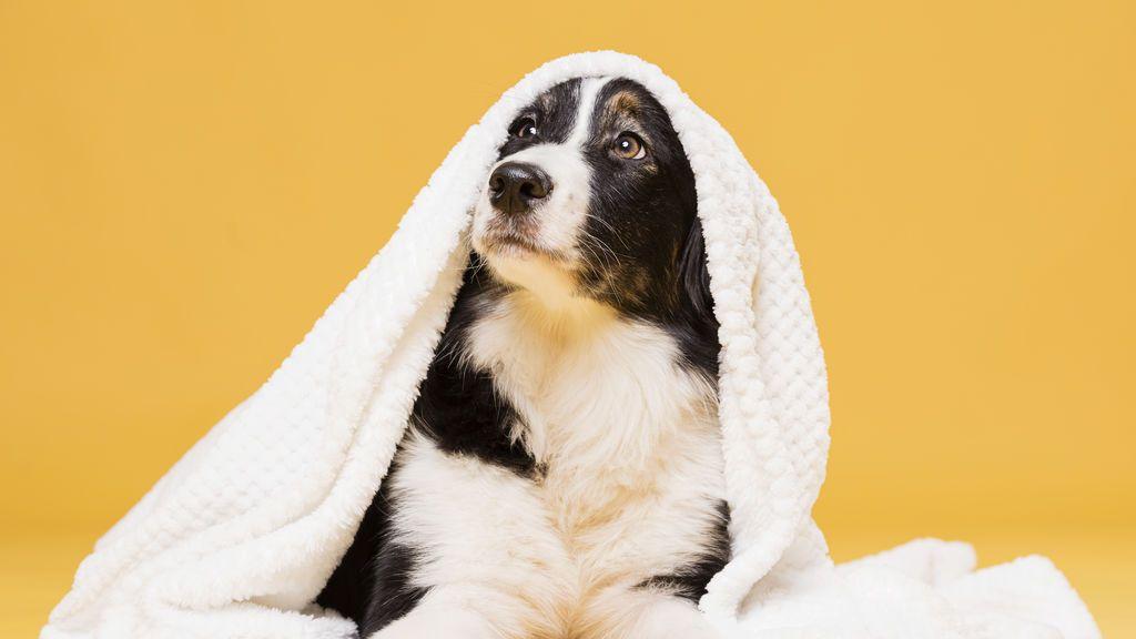 Una habitación, un reto y tu agudeza visual: encuentra al perro en la imagen
