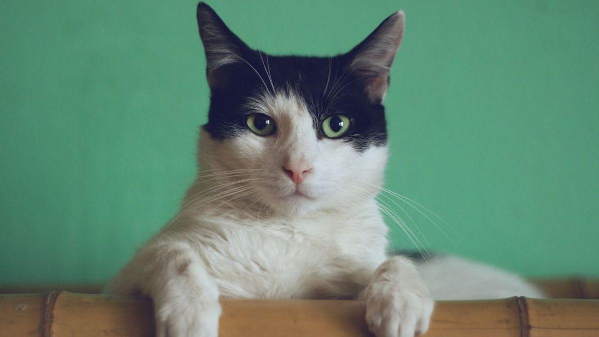 Las pautas para que un gato socialice en su nuevo hogar: ciencia y paciencia