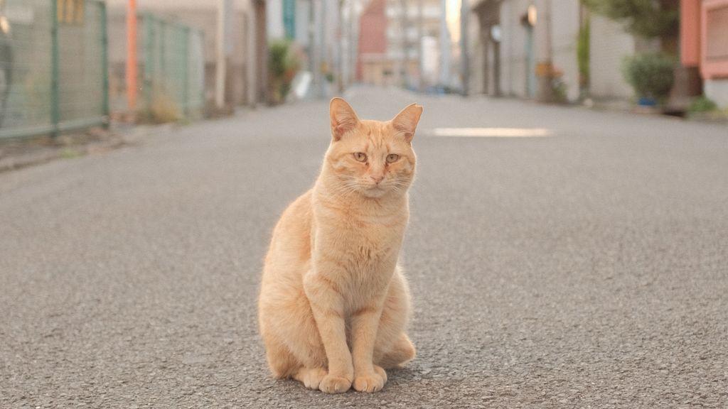 """""""Mi gato se ha perdido y no sé qué hacer"""": guía para no perder los nervios"""