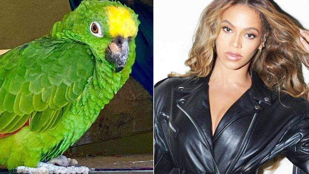 Un loro se convierte en la estrella de un parque al imitar a Beyoncé