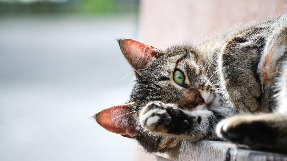 La vida secreta de los gatos: lo que hace tu felino mientras duermes