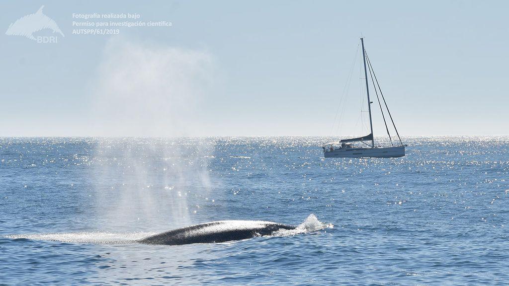 Avistamiento de ballenas en las Rías Baixas